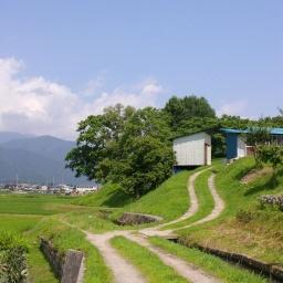 wisteria field